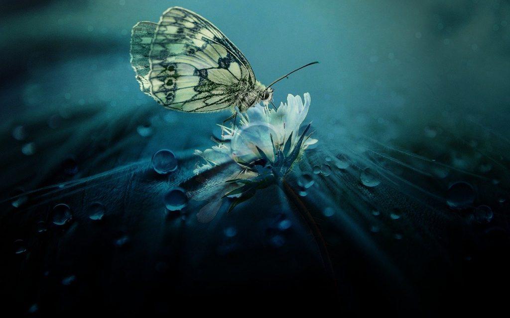 significado esotérico de las mariposas